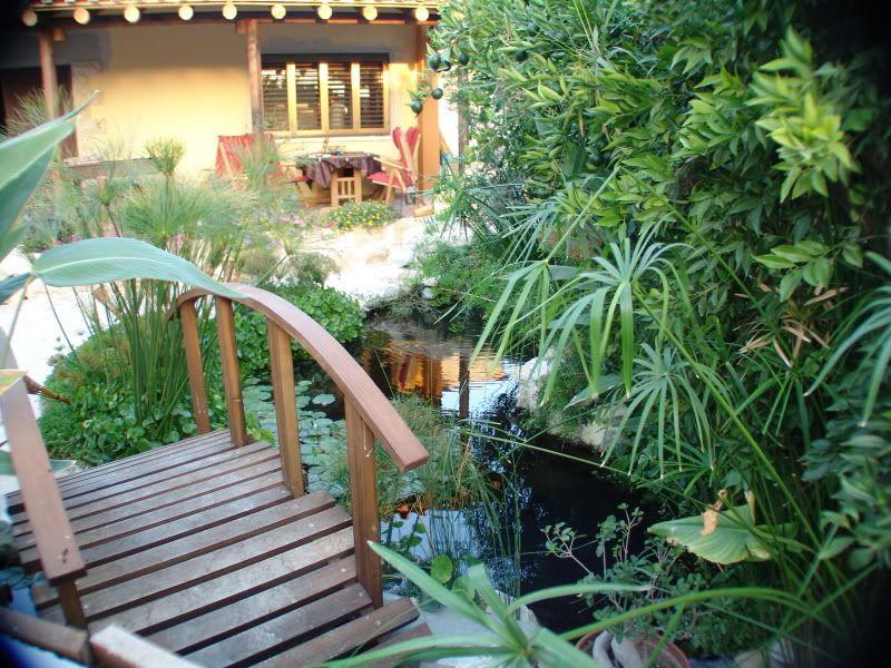 My Pond in Nicosia (CYPRUS) DSC00637
