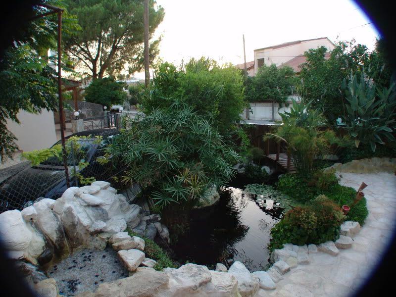 My Pond in Nicosia (CYPRUS) DSC00647
