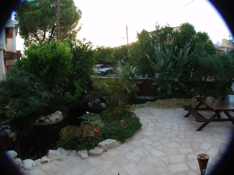 My Pond in Nicosia (CYPRUS) DSC00651