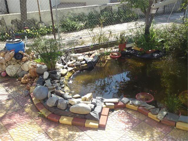 My Pond in Nicosia (CYPRUS) DSC00825