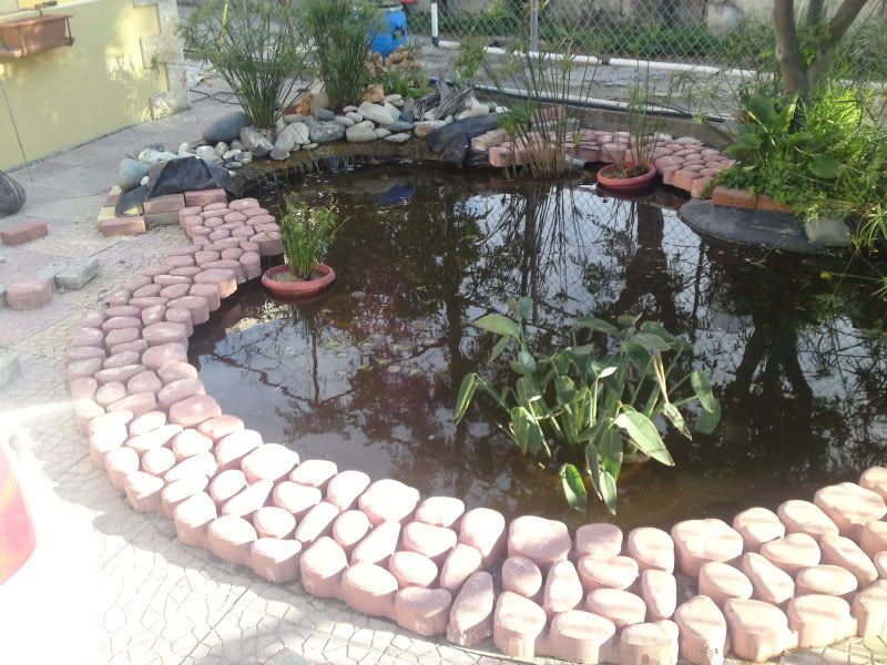 My Pond in Nicosia (CYPRUS) DSC00964