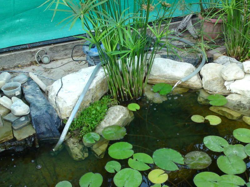 My Pond in Nicosia (CYPRUS) DSC01669