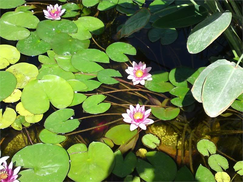 My Pond in Nicosia (CYPRUS) DSC01871