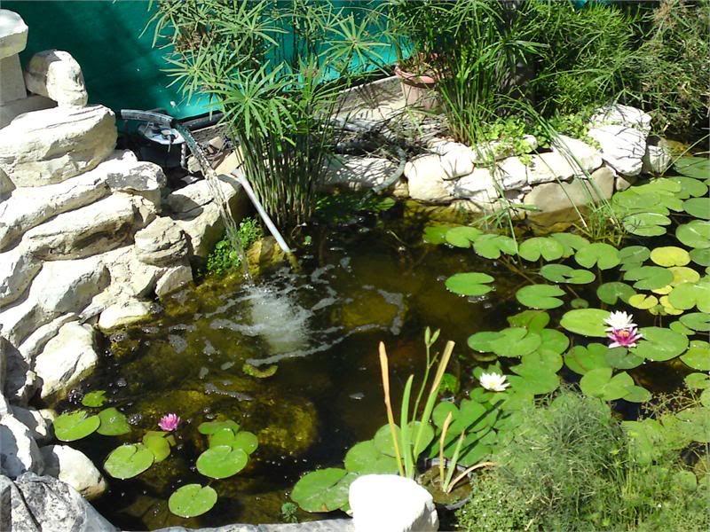 My Pond in Nicosia (CYPRUS) DSC01874