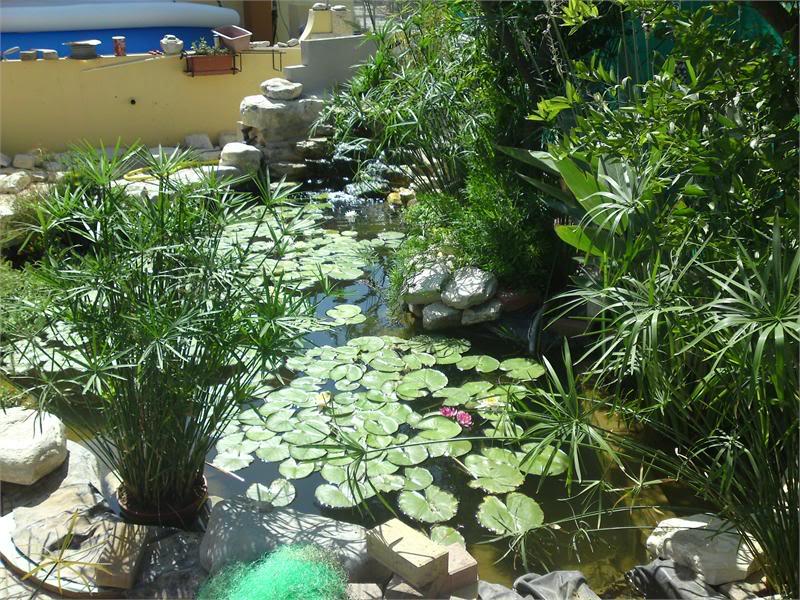 My Pond in Nicosia (CYPRUS) DSC02099