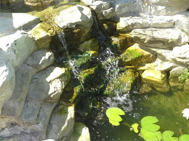 My Pond in Nicosia (CYPRUS) DSC02110