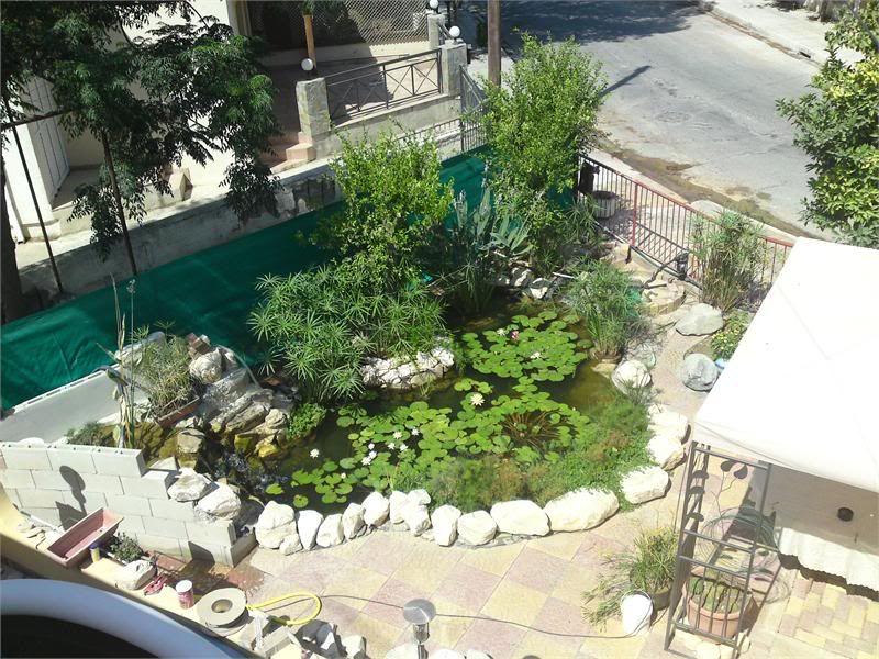 My Pond in Nicosia (CYPRUS) DSC02113