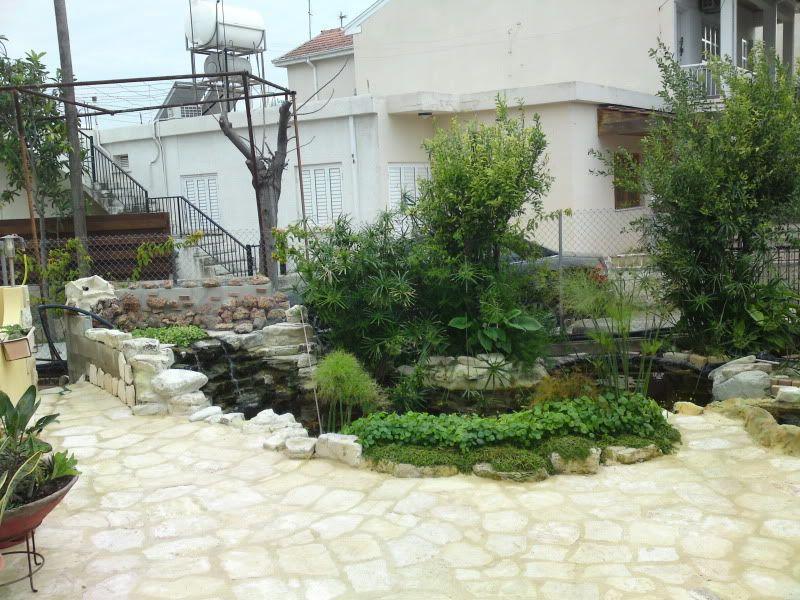 My Pond in Nicosia (CYPRUS) DSC02764
