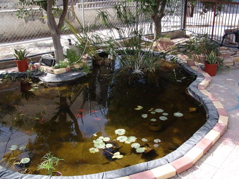 My Pond in Nicosia (CYPRUS) DSC06220