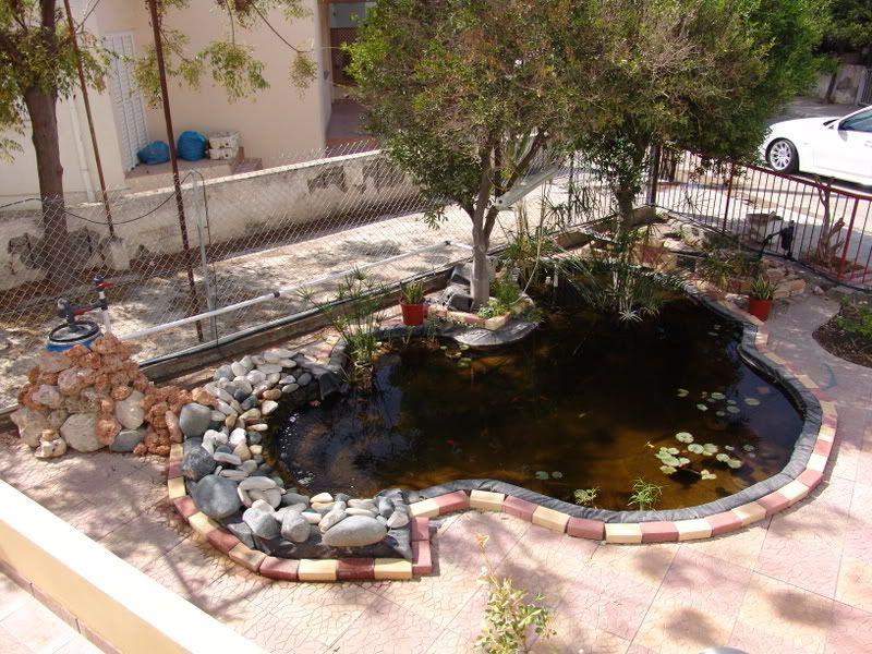 My Pond in Nicosia (CYPRUS) DSC06236