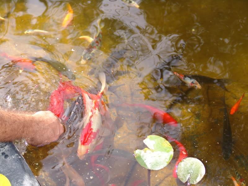 My Pond in Nicosia (CYPRUS) DSC06252