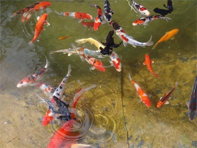 My Pond in Nicosia (CYPRUS) DSC07060