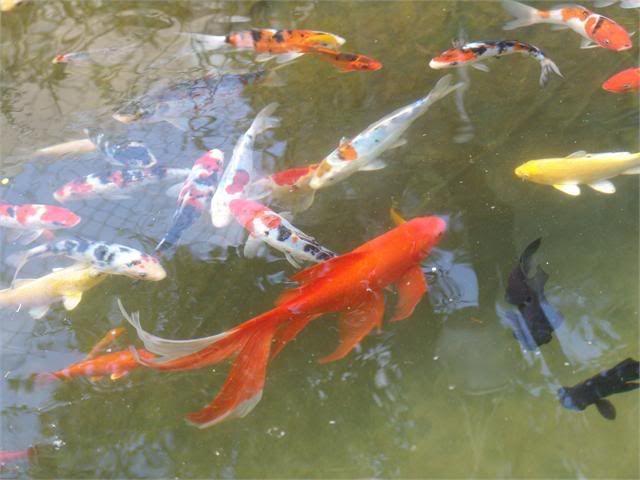 My Pond in Nicosia (CYPRUS) DSC07082