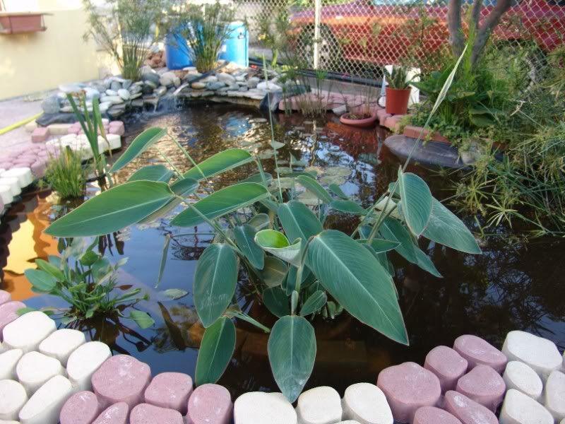 My Pond in Nicosia (CYPRUS) DSC07903