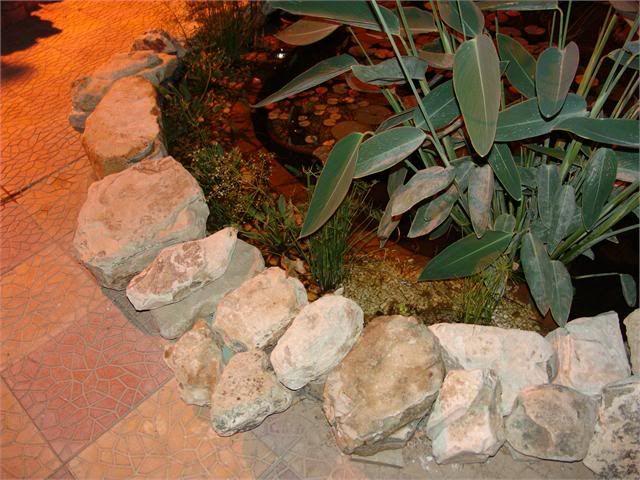My Pond in Nicosia (CYPRUS) DSC08726