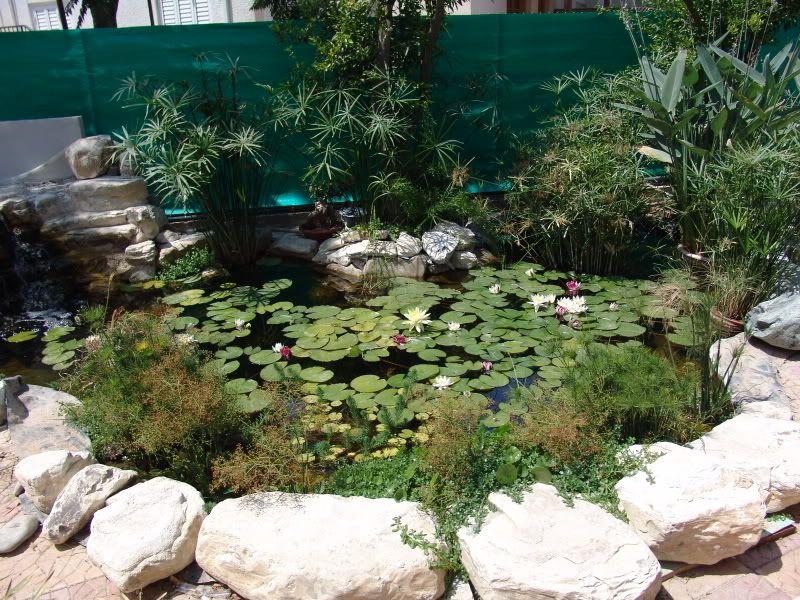 My Pond in Nicosia (CYPRUS) DSC08965