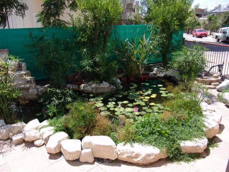 My Pond in Nicosia (CYPRUS) DSC09087800x600