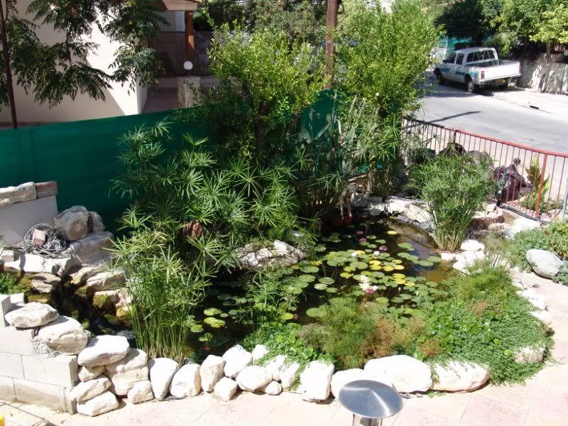 My Pond in Nicosia (CYPRUS) DSC09180800x600