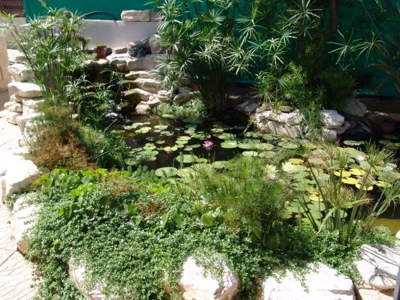 My Pond in Nicosia (CYPRUS) DSC09192800x600