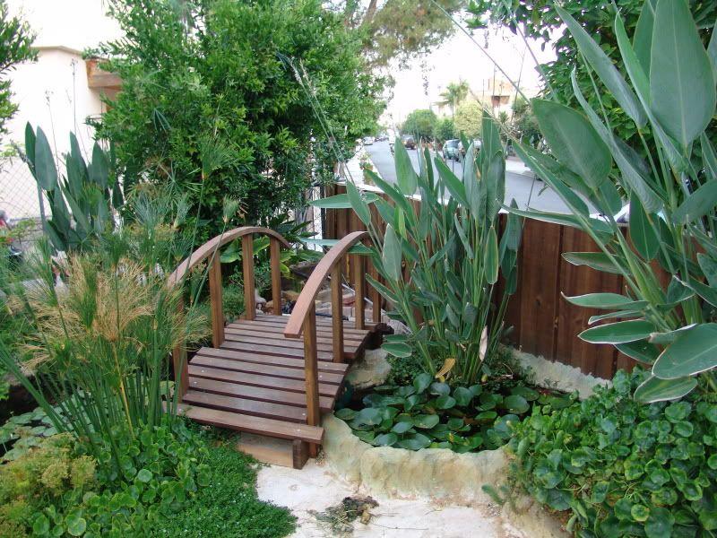 My Pond in Nicosia (CYPRUS) DSC09549