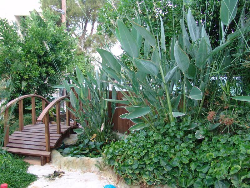 My Pond in Nicosia (CYPRUS) DSC09553