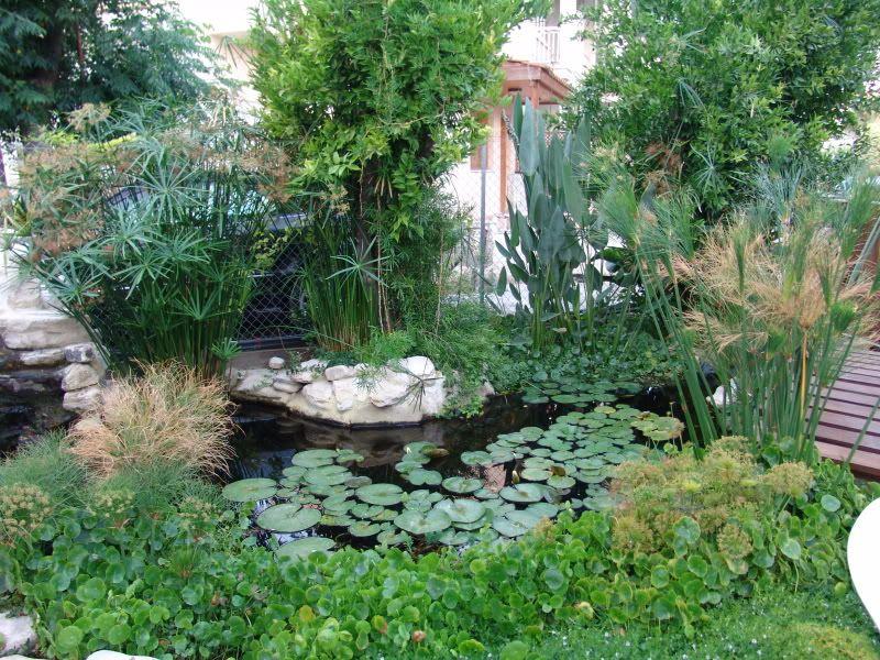 My Pond in Nicosia (CYPRUS) DSC09554