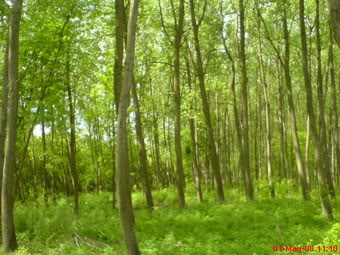 Nase fotografije prirode Suma2
