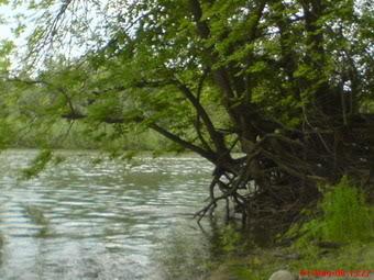 Nase fotografije prirode Suma3-1