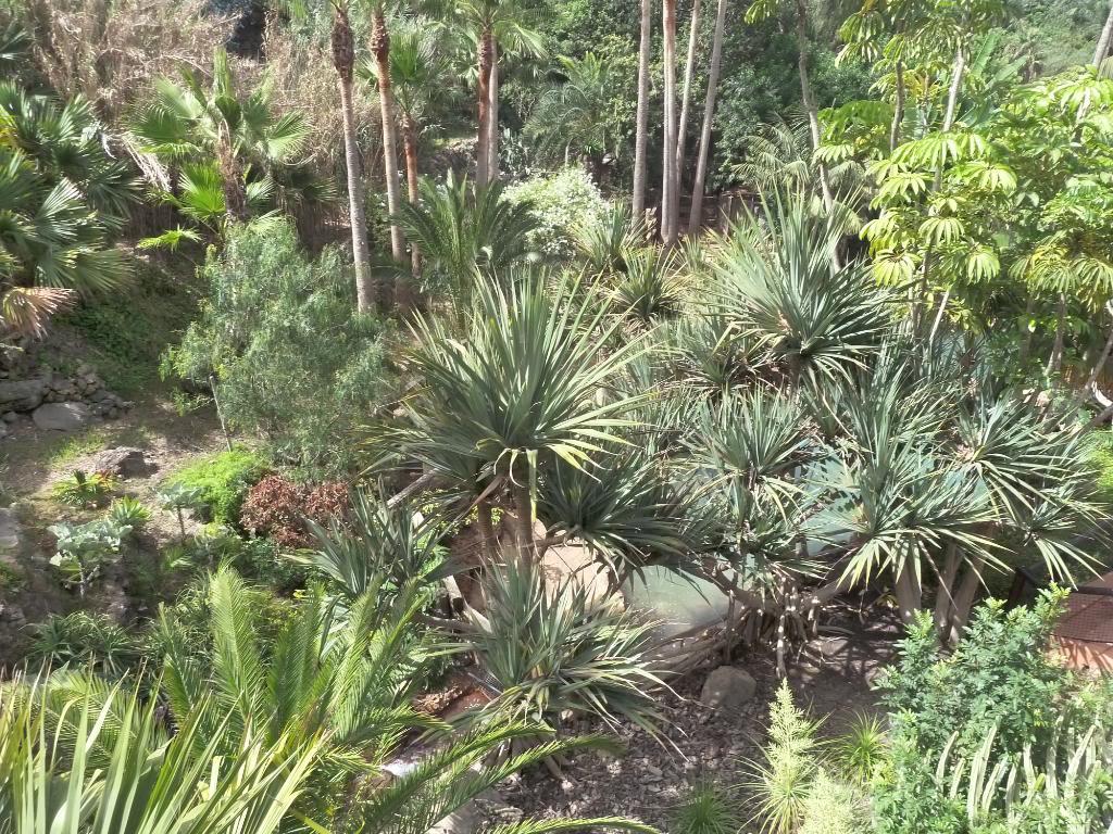 Canary Islands, Tenerife, The Jungle Park P1090937