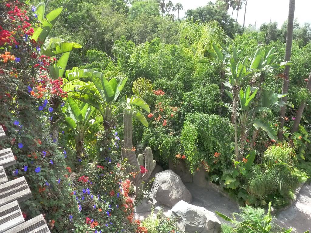 Canary Islands, Tenerife, The Jungle Park P1090954