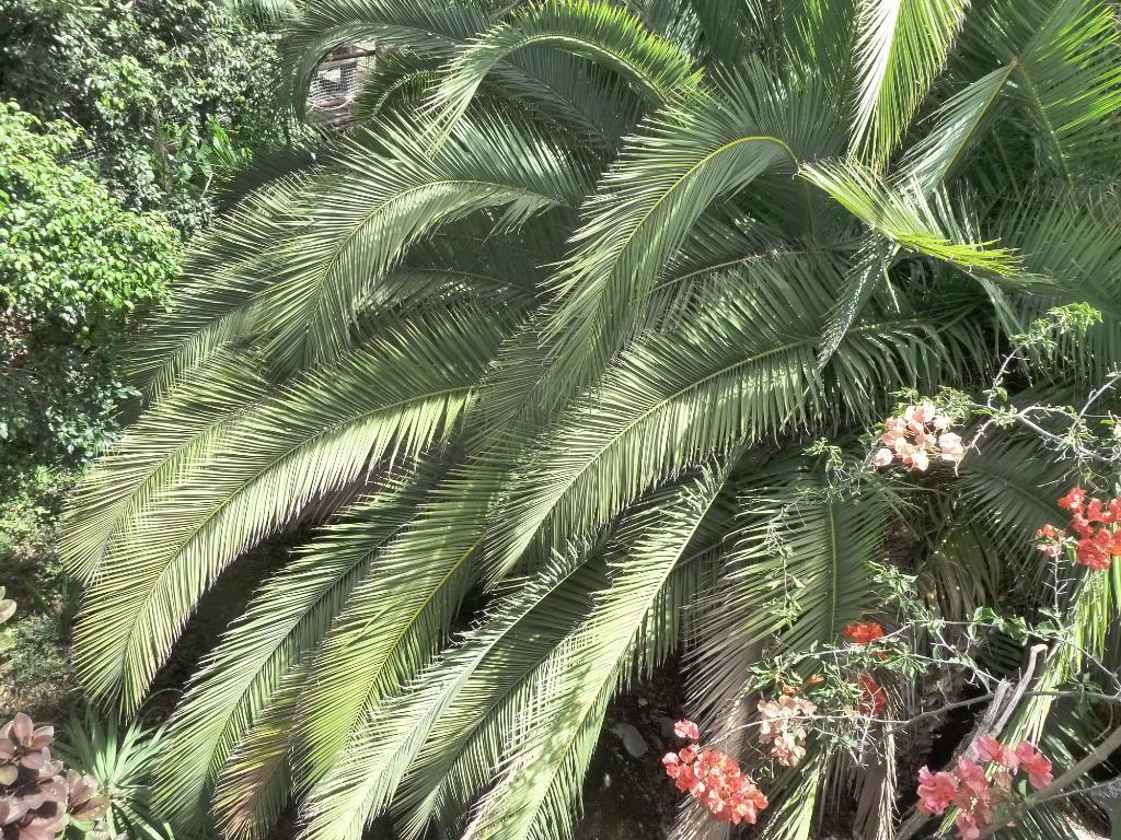 Canary Islands, Tenerife, The Jungle Park P1090955