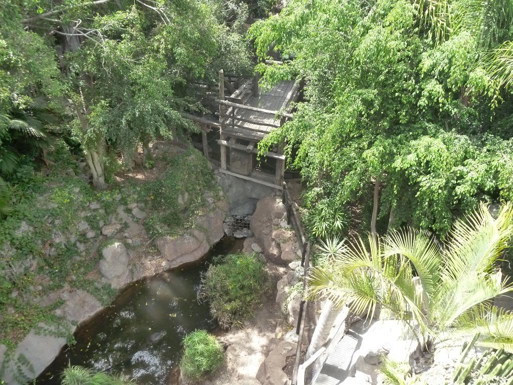 Canary Islands, Tenerife, The Jungle Park P1090957
