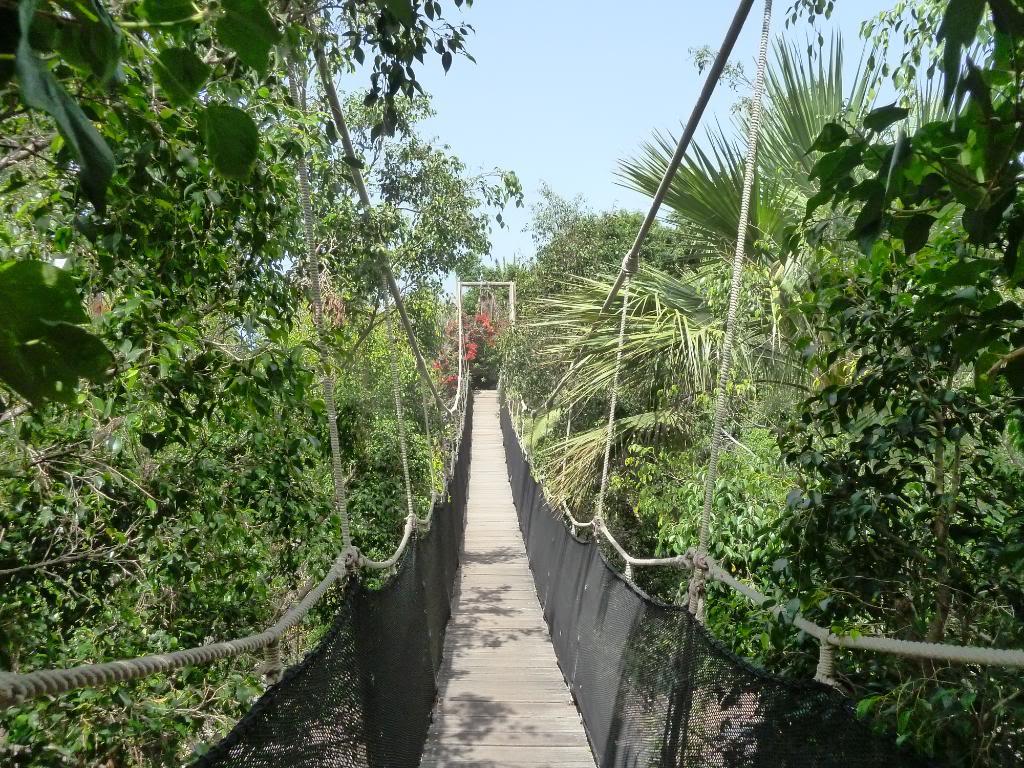Canary Islands, Tenerife, The Jungle Park P1090959