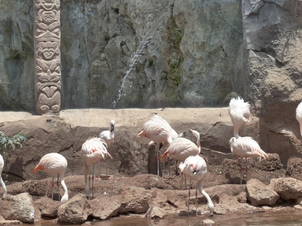 Canary Islands, Tenerife, The Jungle Park P1090993