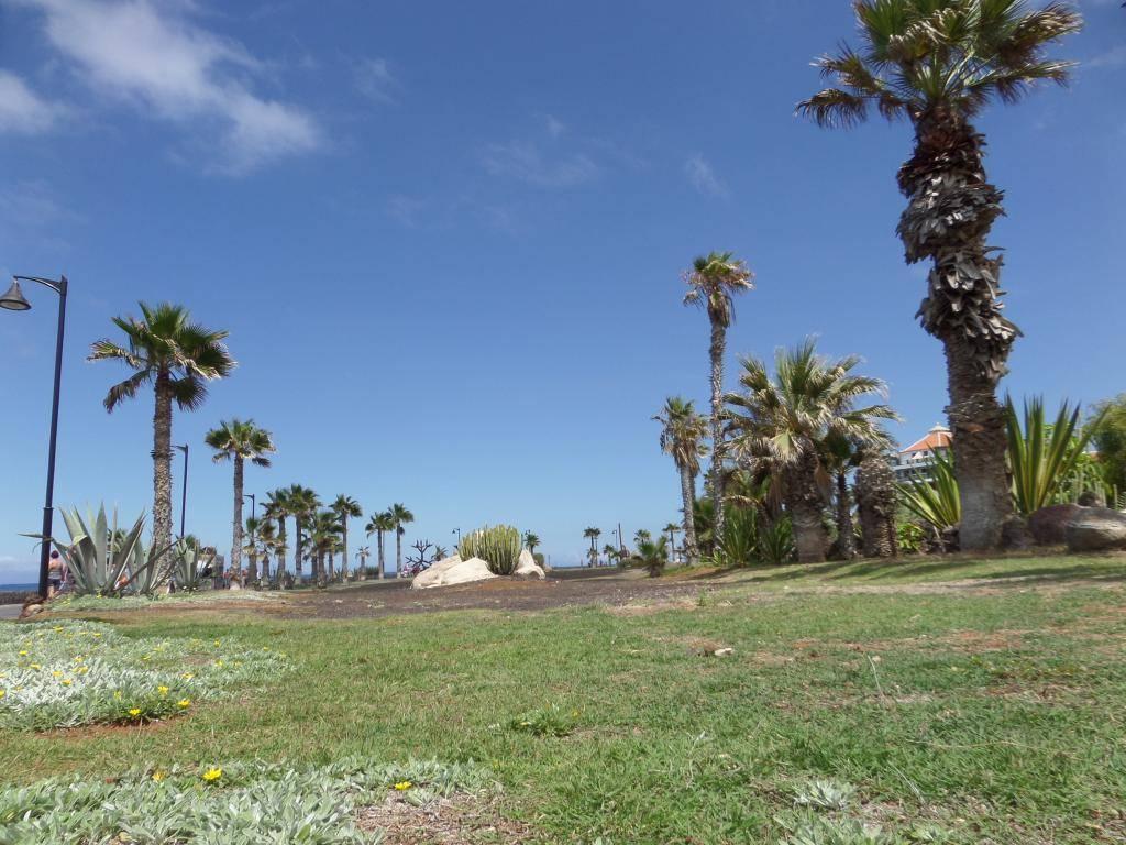 Tenerife, Playa De Las Americas 2014 SAM_0620