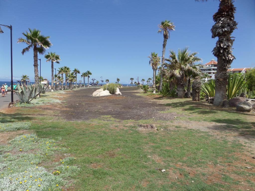 Tenerife, Playa De Las Americas 2014 SAM_0621