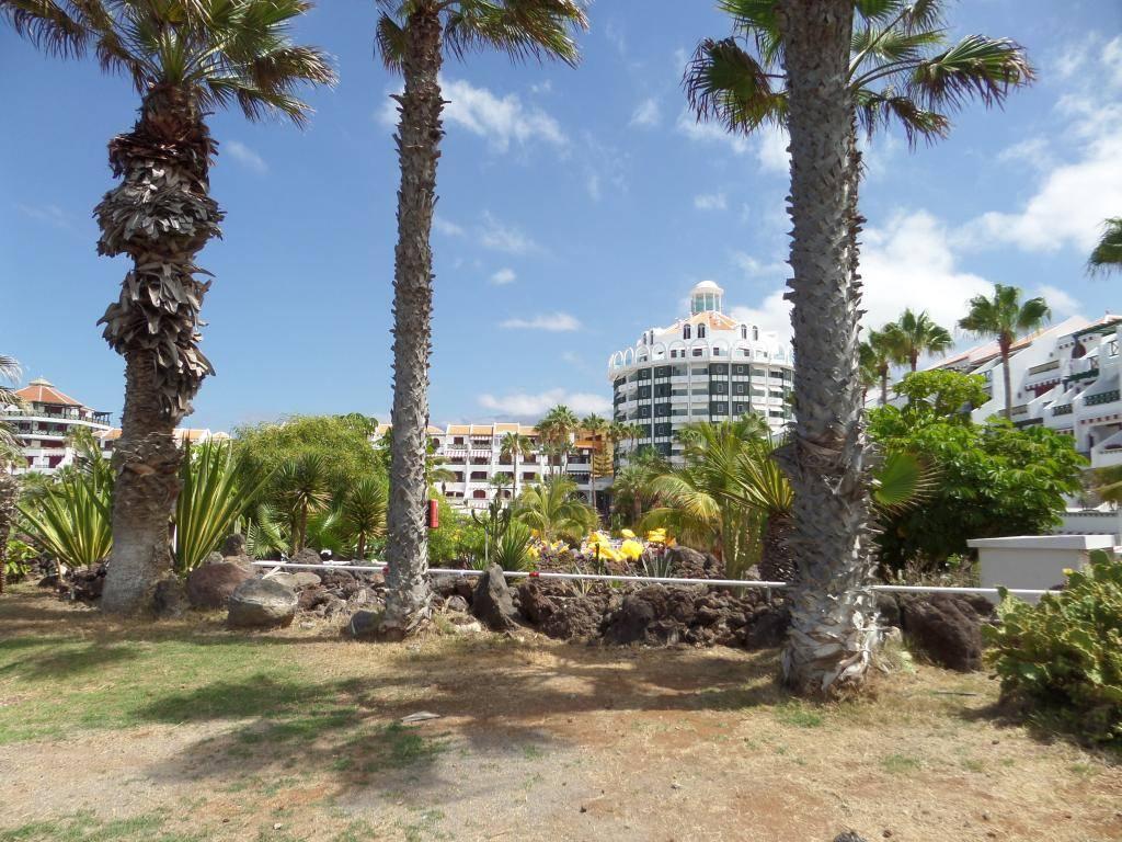 Tenerife, Playa De Las Americas 2014 SAM_0622
