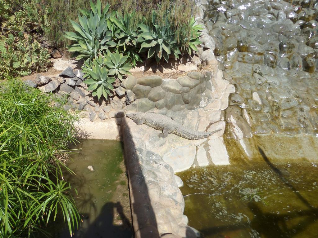 Tenerife, Monkey Park SAM_0693