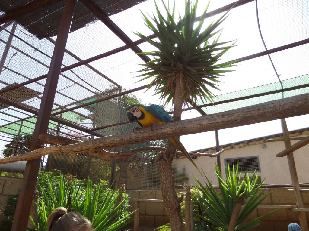 Tenerife, Monkey Park SAM_0697