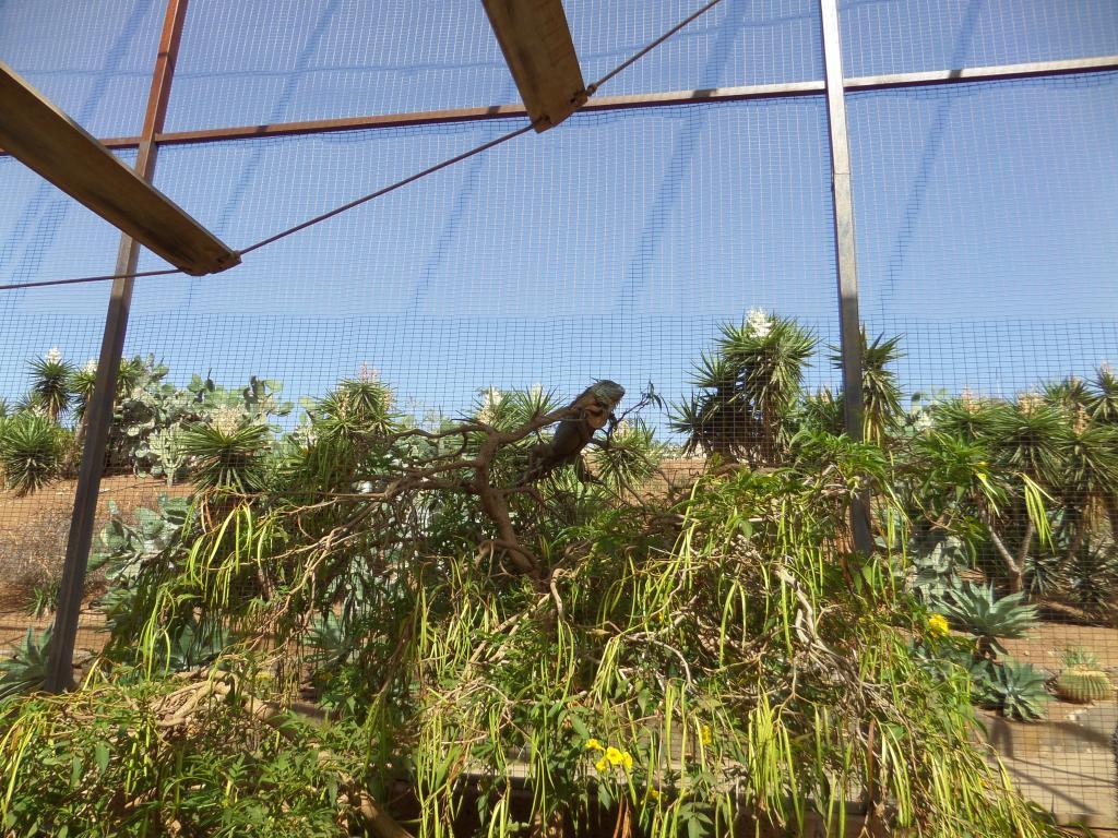 Tenerife, Monkey Park SAM_0699