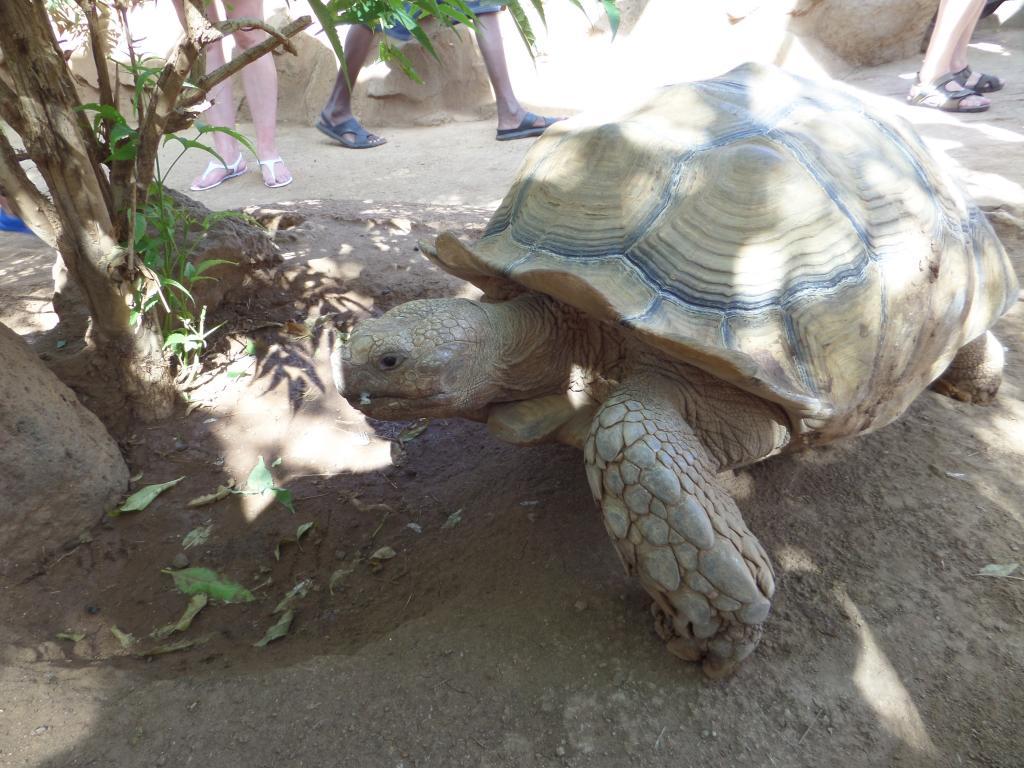 Tenerife, Monkey Park SAM_0701