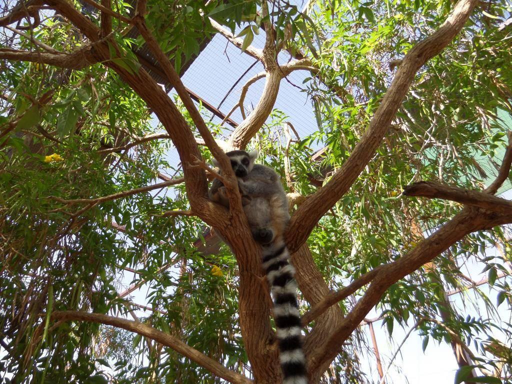 Tenerife, Monkey Park SAM_0705