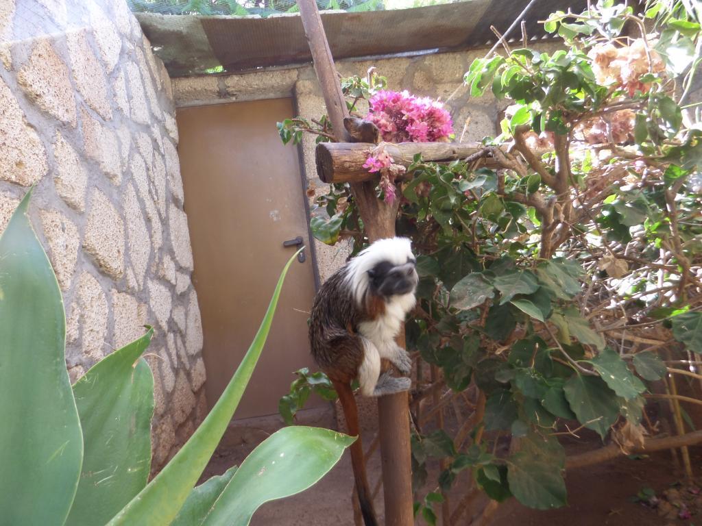 Tenerife, Monkey Park SAM_0706