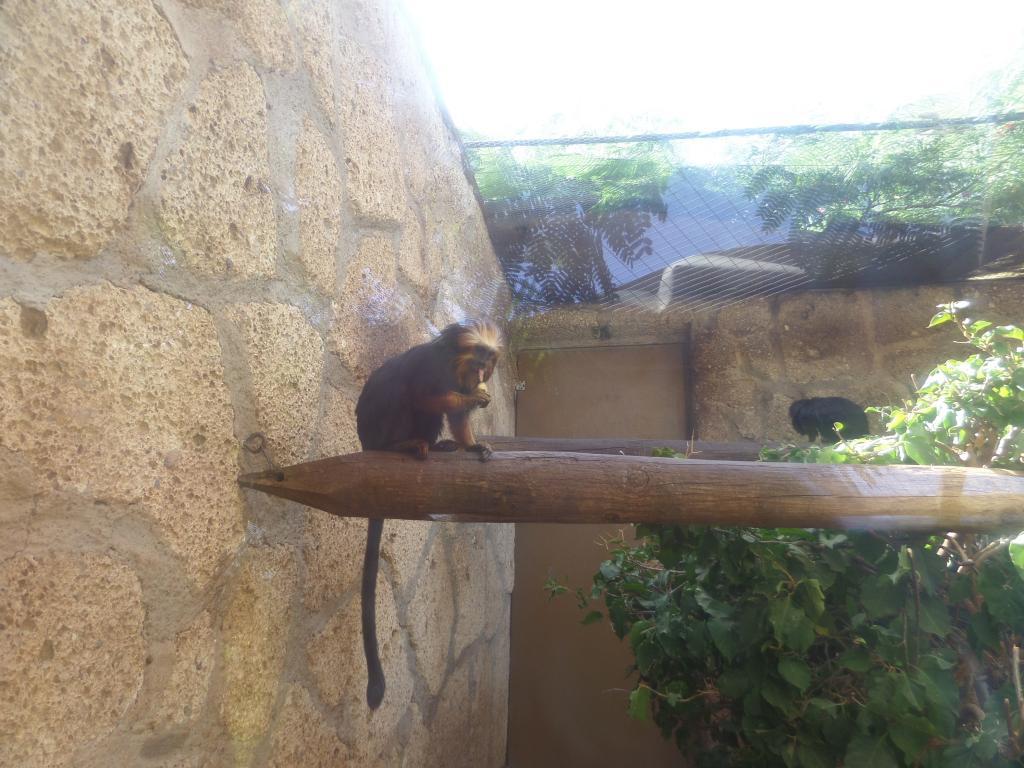 Tenerife, Monkey Park SAM_0708