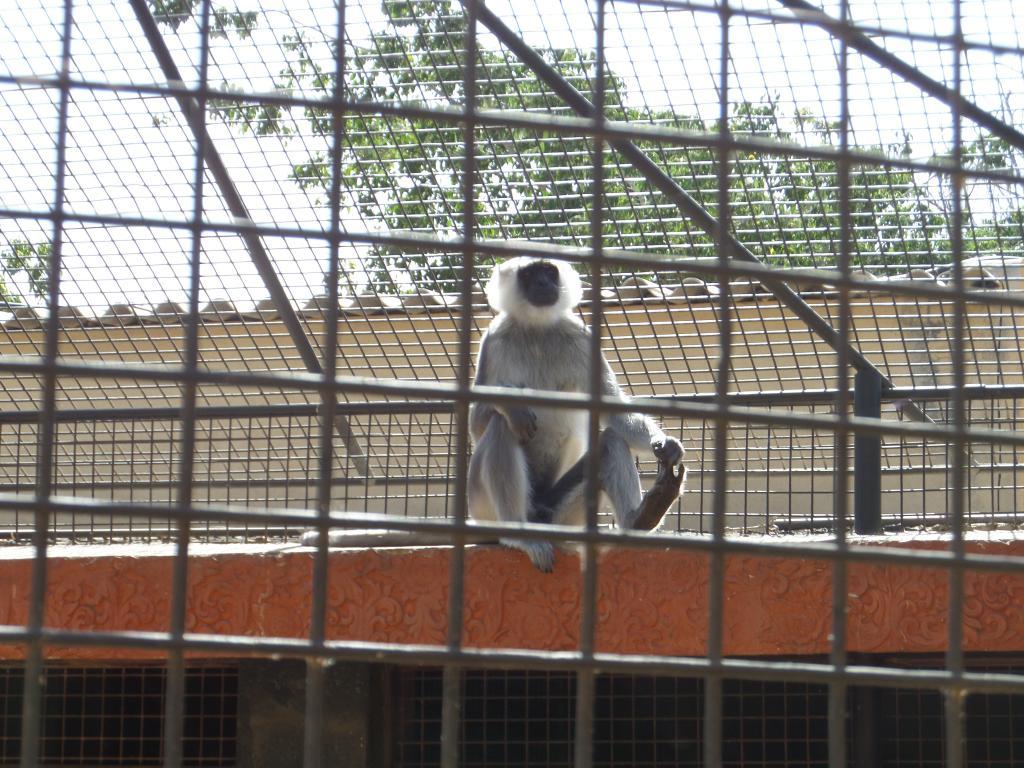 Tenerife, Monkey Park SAM_0716
