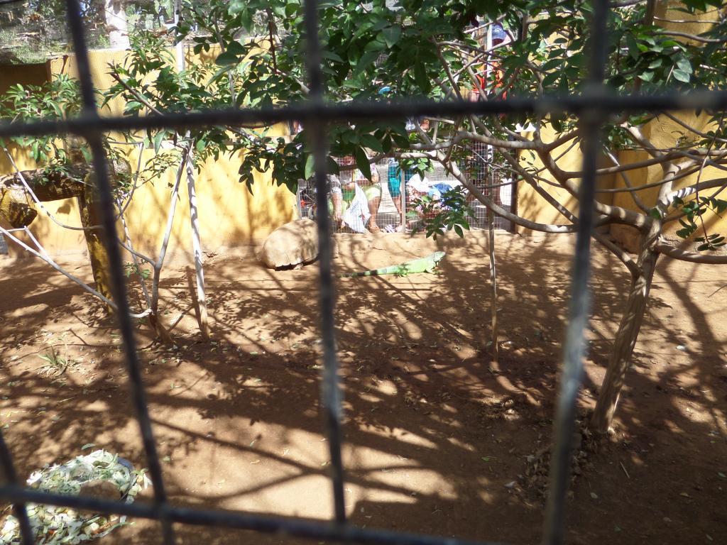 Tenerife, Monkey Park SAM_0728