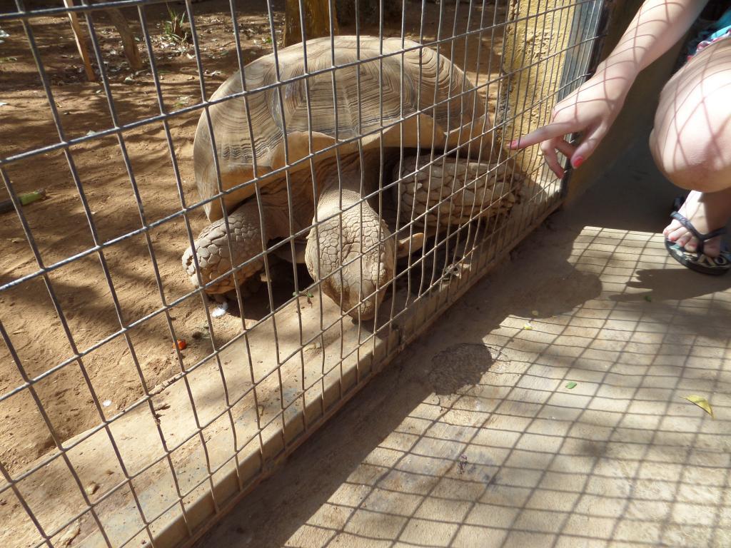 Tenerife, Monkey Park SAM_0731