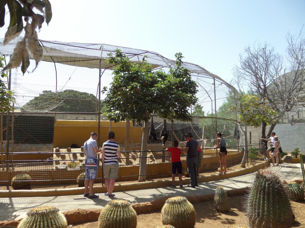 Tenerife, Monkey Park SAM_0751