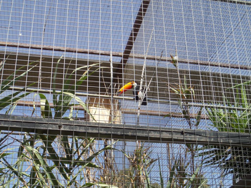 Tenerife, Monkey Park SAM_0755