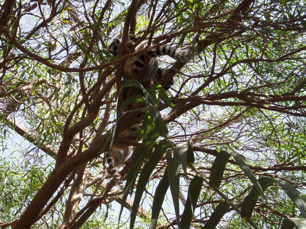 Tenerife, Monkey Park SAM_0762